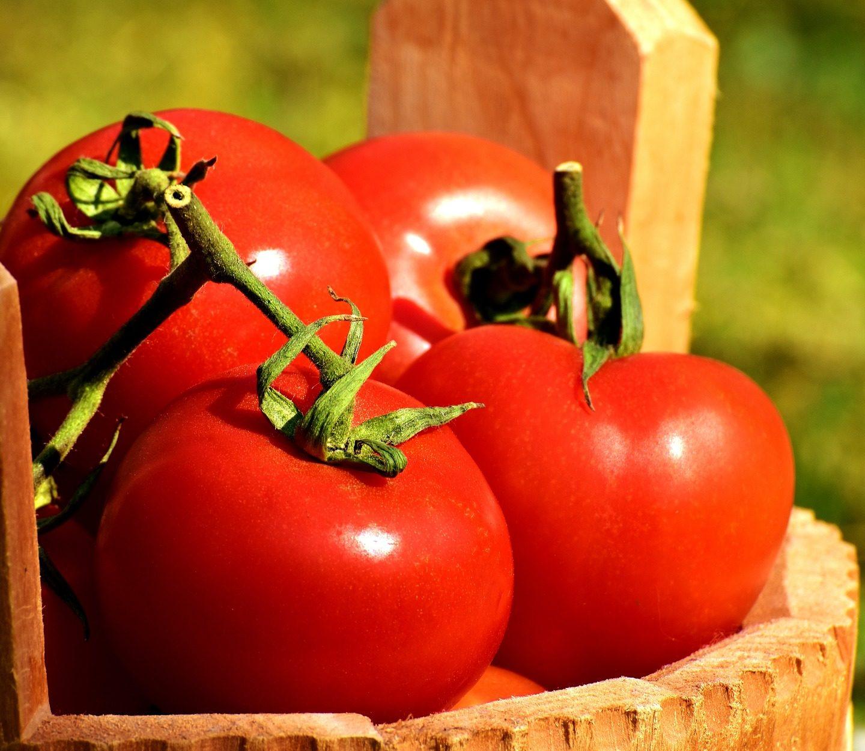 Получаване на домати без семе на основата на партенокарпия и използване на геномно редактиране чрез CRISPR/Cas9