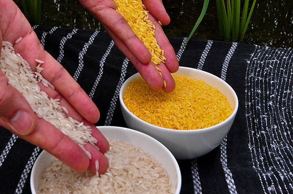 Golden rice gets approval from US FDA