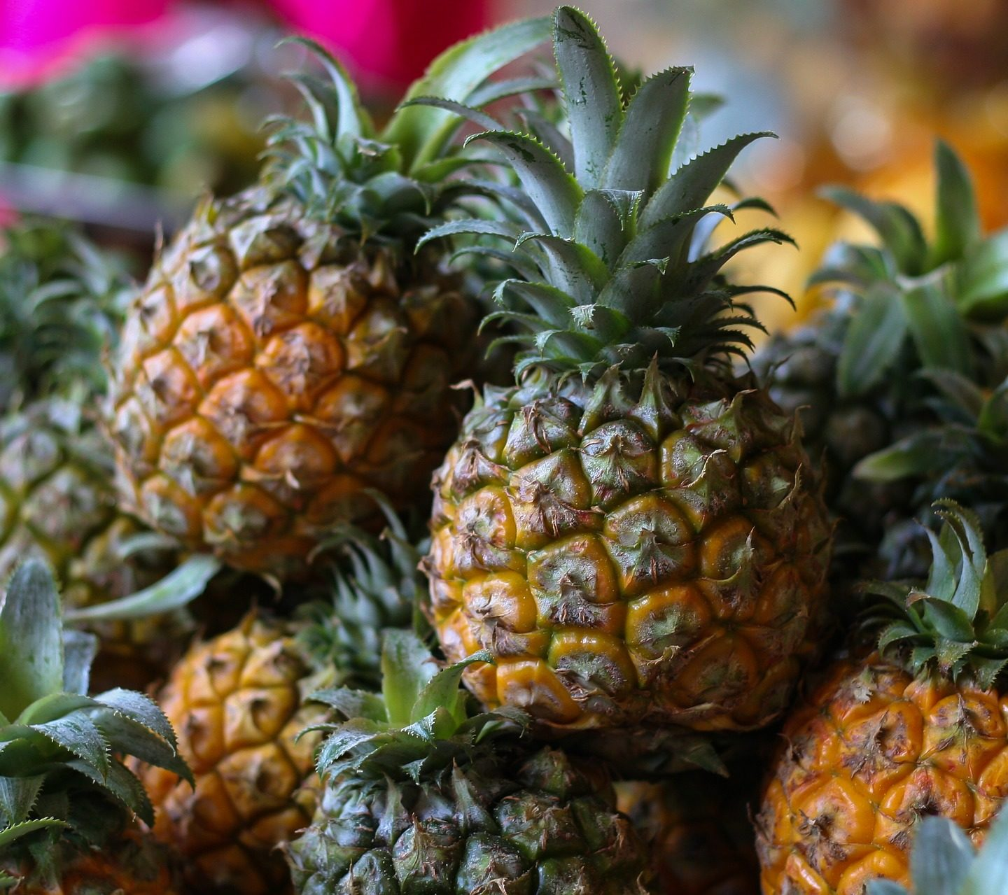 Protoplast isolation method for genetic improvement of pineapple
