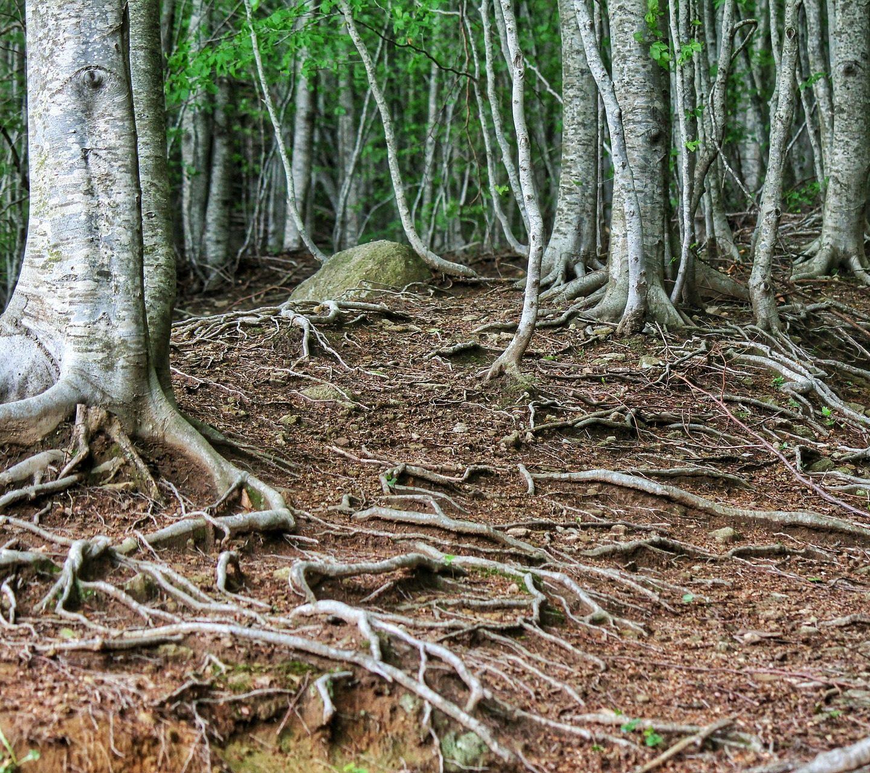Как корените на растенията се разклоняват, за да достигнат вода?