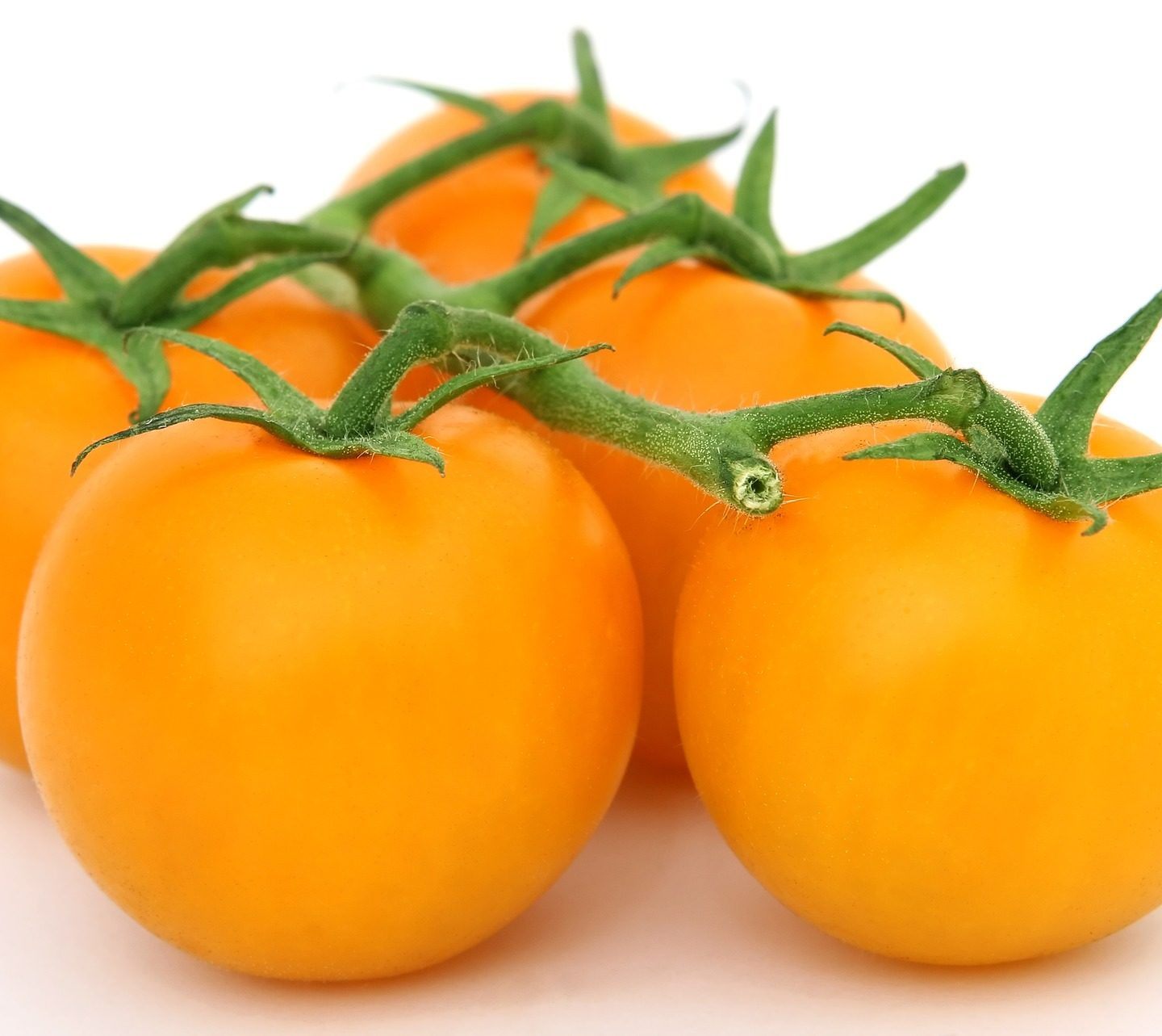 Zeaxanthin‐rich tomato fruit developed through genetic manipulations of carotenoid biosynthesis