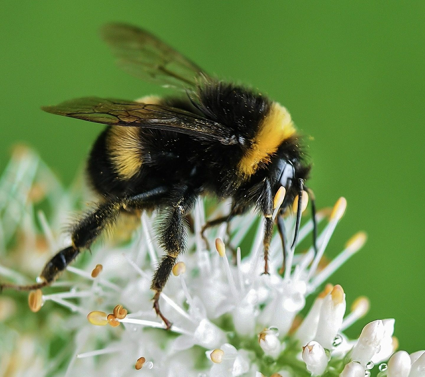 Bumblebees Poke Leaves to Help Flowers Bloom Faster