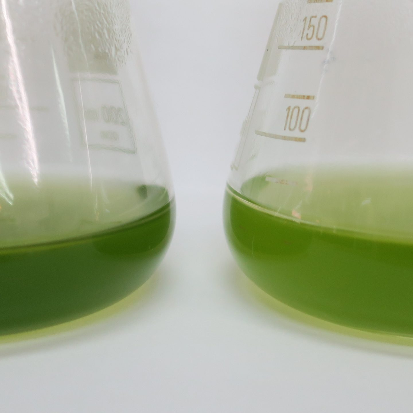 Cyanobacteria could revolutionize the plastic industry