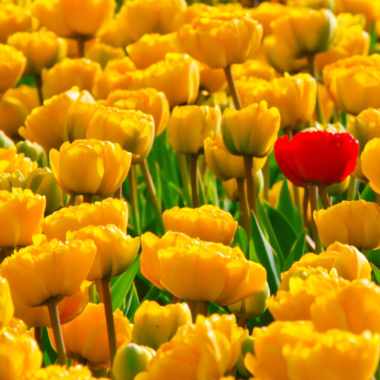 Растителна биотехнология и селекция в България