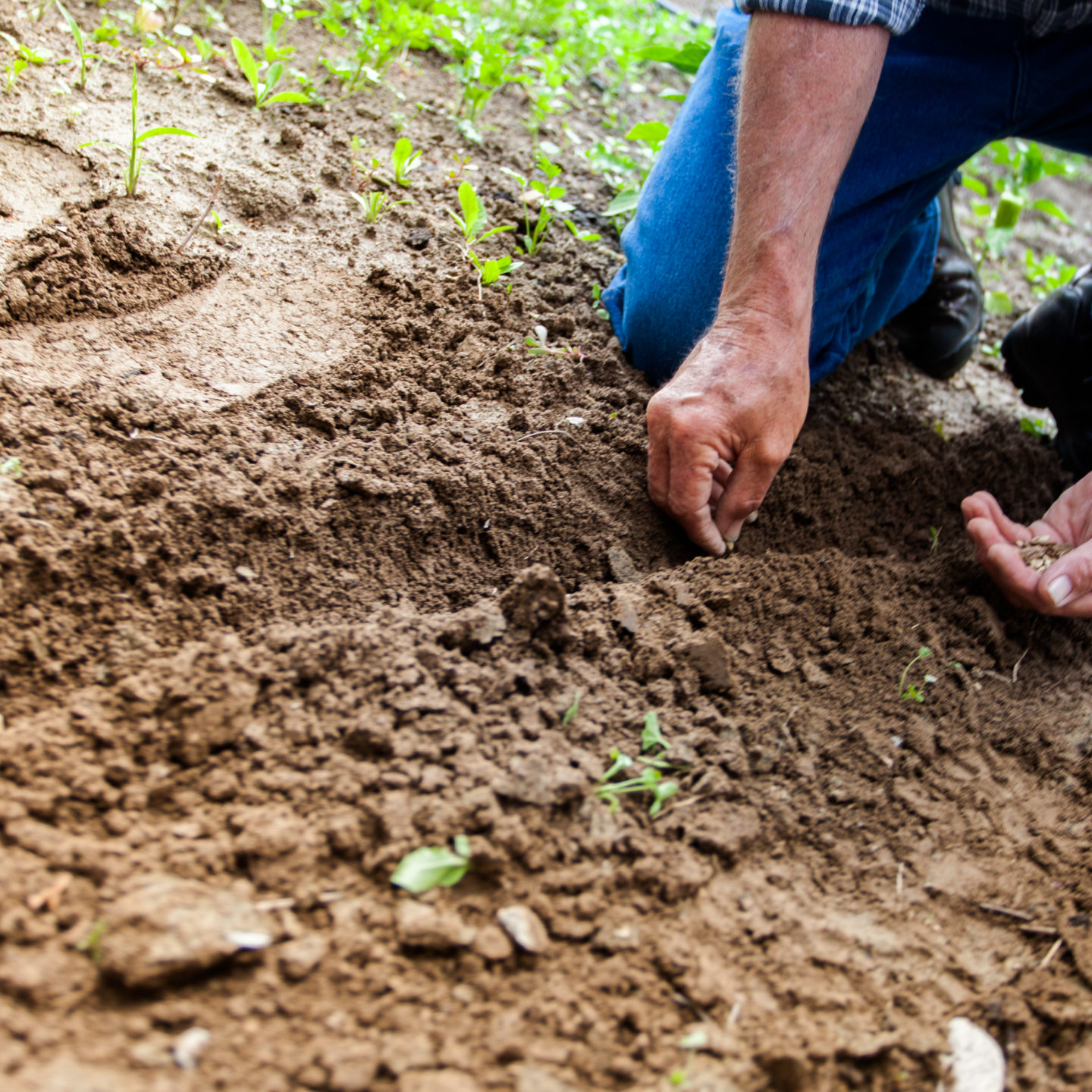 What makes soil, soil? Researchers find hidden clues in DNA