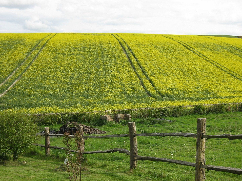 US agriculture secretary issues USDA statement on plant breeding innovation