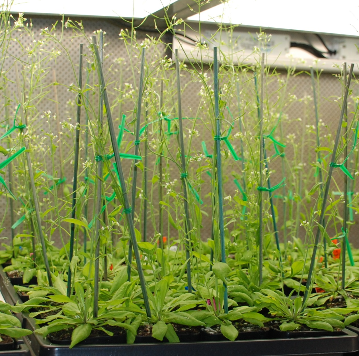 Biologists Develop Defense to Fight Crop Infections