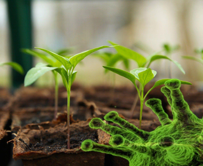 Ролята на растителната биотехнология срещу SARS-CoV-2
